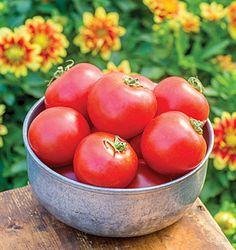 Tomato Plants and Seeds - Beefsteak, Cherry, Heirloom Tomatoes at Burpee Seeds - Burpee.com