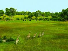 Botswana in the green season