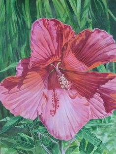 """Giant Beauty"", watercolor hibiscus, pink flowers, large pink flowers, watercolor flowers"