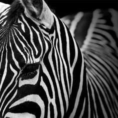 Monochrome Animal Photography by Lukas Holas