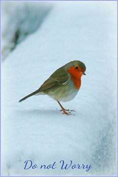 Look at the birds of the air; they do not sow or reap or store away in barns, and yet your heavenly Father feeds them. Are you not much more valuable than they? Pretty Birds, Love Birds, Beautiful Birds, Animals Beautiful, Animals And Pets, Cute Animals, Robin Redbreast, Robin Bird, Mundo Animal