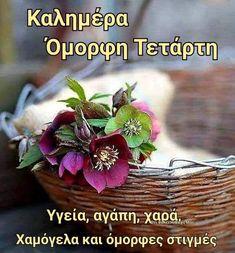 Beautiful Pink Roses, Good Morning, Flowers, Plants, Laura Ashley, Decor, Morning Sayings, Inspiring Sayings, Buen Dia