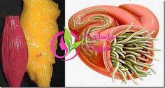 Sadece 2 basit doğal madde ile vücudunuzdaki tüm parazit ve yağlardan kurtulabileceğinizi biliyor muydunuz? Uzmanlara göre, vücut yağı aslında vücudunuzun doğru kullanması gereken enerjidir.Bu sağlıklı ve sıkı bir diyet izlenerek yapılabilir, ancak yağ yakma işlemi de glikojen ve protein gibi enerji rezervlerinden etkilenir.Daha fazla yağ yakmak için, vücudunuzun bu rezervleri kullanma biçimini değiştirmeniz gerekir İnsanlar …