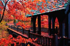 Autumn Bridge by Indy Kethdy on Flickr.
