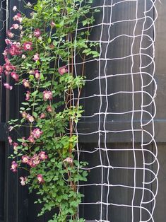 Vertically hung garden fence edging serves as a unique trellis----such a simple idea.....yet I would have never thought of it :P