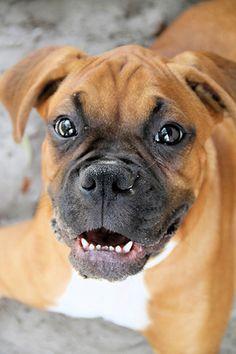 Love happy dogs