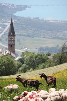 Deux chèvres surplombant le lac de Serre-ponçon