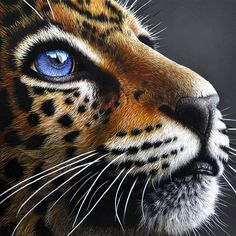 Jaguar Cub Painting by Jurek Zamoyski - Jaguar Cub Fine Art Prints and Posters… Beautiful Cats, Animals Beautiful, Beautiful Soul, Animals And Pets, Cute Animals, Tier Fotos, Ginger Cats, Cat Tattoo, Wildlife Art