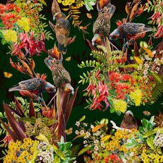 Garden Kaka (55cm) Flora And Fauna, Limited Edition Prints, New Zealand, Watercolor Paintings, Digital Prints, Vibrant, Artists, Canvas, Paper