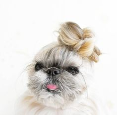 Feast your eyes upon this little doggo from Japan. | This Dog's Hair Is Honestly Better Than Mine