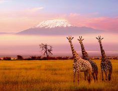 Próximo destino - hope giraffes enjoy the view. do they?