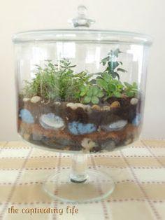 Making a terrarium