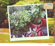 Cida Araújo nos enviou uma foto de sua horta.