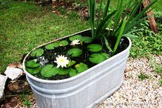'Mini' pond water feature in oval zinc tub. This website shows how to create a small water feature with your children's help in ten easy steps: http://waddleeahchaa.com/2011/07/19/10-easy-steps-to-create-a-simple-backyard-pond-with-children/  Repinned by www.claudiadeyongdesigns.com