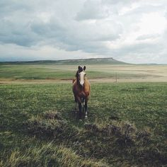Cowboy junkies wild horses