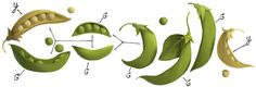 Google doodle to celebrate the 189th birthday of Austrian botanist and monk Gregor Mendel