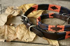 Polo Belt Dog Collar in bold Audaz design, orange and navy