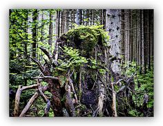 """Oldrobel's Fotoreise: there is no """"deadwood"""""""