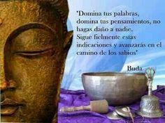 Buda Famous Phrases, Famous Quotes, Reiki, Fen Shui, Buddhist Philosophy, Buddha Zen, Spiritual Messages, Positive Mind, Best Vibrators