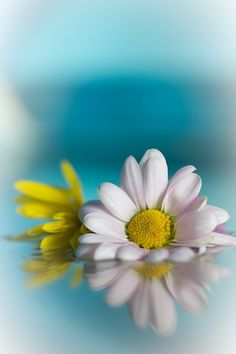 http://www.margaritablue.com/es/                   A Wedding Flower Guide