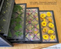 Excalibur Dehydrator- drying Raspberry leaves, basil, chives and other herbs