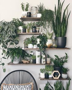 Amazing House Plants Indoor Decor Ideas Must 45 House Design, Plant Wall, Room Decor, Room With Plants, Living Room Decor, Living Room Plants, Boho Master Bedroom, Vertical Wall Planter Pots, Plant Decor Indoor