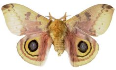 super into moths right now (Colorado has TONS)