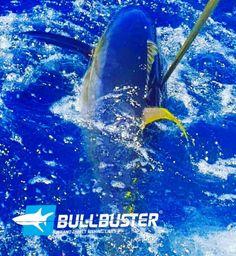 Fishing Report: The Yellowfin Tuna Bite Has Been Going Off In Venice Louisiana! Tuna Fishing, Yellowfin Tuna, Offshore Fishing, Fishing Report, Louisiana, Venice, Louisiana Tattoo