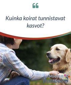 Kuinka koirat tunnistavat kasvot?  Koirat #ovat ainutlaatuisia #eläimiä, jotka hyvin käyttäytyvinä tarjoavat #ehtymätöntä kumppanuutta ja rakkautta. Ne ovat aina valmiita #leikkimään, seuraamaan sinua ympäriinsä ja olemaan #kanssasi.