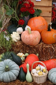 Autumn means Pumpkins!