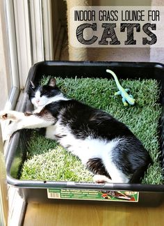 Make a grass lounge for your indoor cat with a cement mixing pan and a sheet of sod from your local hardware store. (Only $10 for the tray and sod, new sod costs about $2.50 in our area and lasts up to 5 days indoors.) #catsdiyenclosure