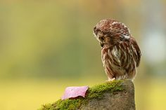 Tiny Owl makes me smile every time!