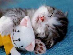 So cute I am dying!