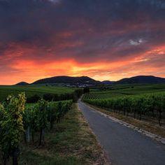 Weinberge in der Pfalz - wine hills in rhineland palatinate