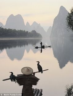 The sun sets on a dying tradition: Beautiful pictures show the breathtaking tranquility of Chinese rivers as fisherman use birds to catch their prey