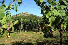 Arranca la fiesta de la vendimia de la Ruta del Vino Monterrei http://www.vinetur.com/2013101813659/arranca-la-fiesta-de-la-vendimia-de-la-ruta-del-vino-monterrei.html