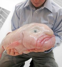 Do you EVER feel like a Blobfish? Huh?  Blobfish - Found in the deep seas off the coast of Australia, the Blobfish is as lethargic as it looks and sounds. While this aquatic being may look like something out of a horror film, there's no need to be scared because it's essentially a floating gelatinous mass with very little muscle. The comatose creature doesn't even bother to swim; it simply swallows whatever drifts by its mouth, making it even more sloth-like than an actual sloth.