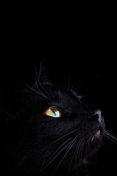 What a beautiful photograph. Black on Black by Mark Johnson.