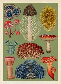 Illustrator Katie Scott returns to the Welcome to the Museum series with exquisite, detailed images of some of the most fascinating living organisms on this planet - fungi. From the fungi we see on supermarket shelves to fungi like penicillium that have s Botanical Drawings, Botanical Prints, Vintage Botanical Illustration, Mushroom Art, Wall Collage, Cool Art, Art Drawings, Stuffed Mushrooms, Artsy