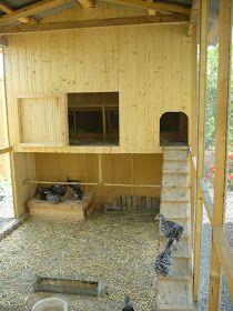 Finca Almumar: Gallineros y Voladeras Chicken Barn, Chicken Home, Chicken Feed, Diy Chicken Coop, Pet Chickens, Raising Chickens, Chickens Backyard, Outdoor Cat Enclosure, Barn Animals