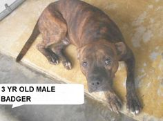 BADGER located in Elizabethtown, NC has 1 day Left to Live. Adopt him now!