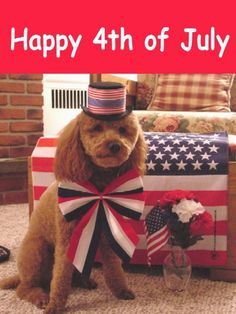 logan s funny dog pictures july 4th happy july 4th