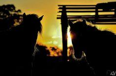 #lorenzo fotografias Sun horses  Cavalos crioulos