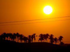 Sol nordestino  Região dos cocais Maranhão Brasil  http://www.zeliadicaseideias.blogspot.com.br/search/label/fotografia?updated-max=2011-05-04T16:30:00-03:00=20=46=false