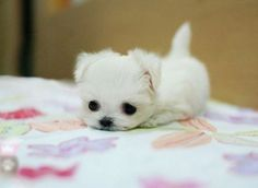 Cutest Puppy Ever