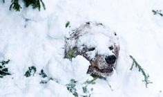 The First Day of Spring -Palle-Jooseppi, a male brown bear at Ranua Zoo, wakes up after winter hibernation in Ranua, Finland, on February 23, 2012