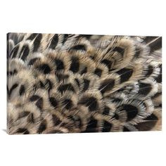 East Urban Home 'Ring-Necked Pheasant Close Up of Female'S Feathers' Photographic Print on Canvas Size:
