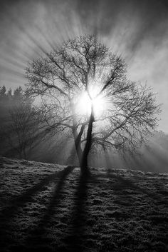 ~~Ethereal tree | mono landscape, crepuscular rays, Charinaz, Rhones-Alpes, France by Regarde là-bas~~