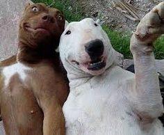 Imagen de http://www.schnauzi.com/wp-content/uploads/2014/05/perros-selfie.jpg.