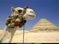"""Résultat de recherche d'images pour """"chameaux et dromadaires"""""""